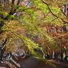 富士河口湖紅葉祭り_Vol1