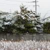 """曇り時々雪?<>!(-""""-)"""