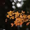 晩秋の風情9