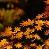 晩秋の風情4