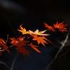 晩秋の風情3
