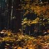 晩秋の風情5
