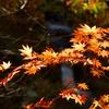 晩秋の風情2