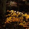 晩秋の風情7