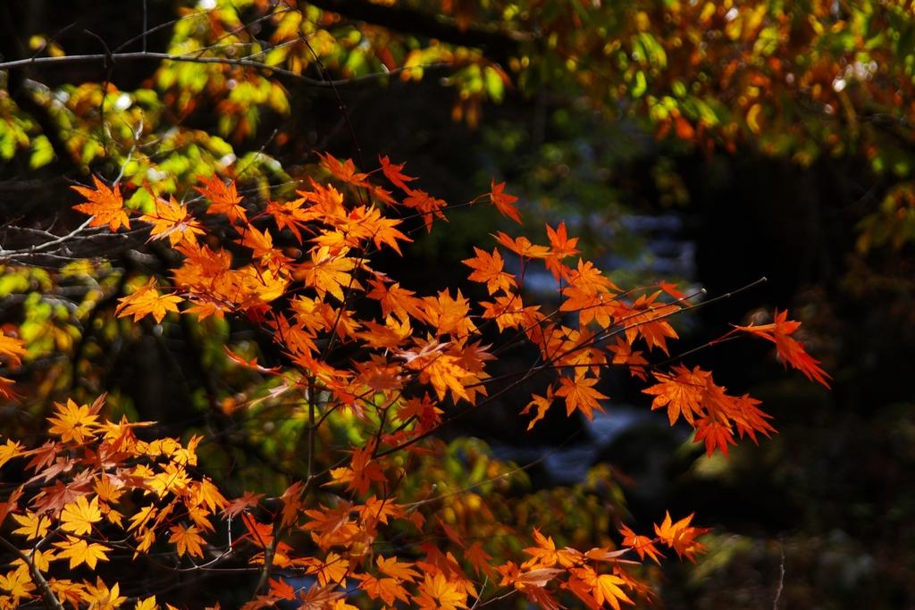 晩秋の風情1