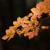 晩秋の風情10
