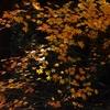 晩秋の風情6