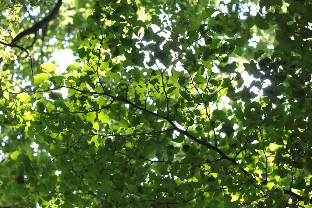 緑と日の光