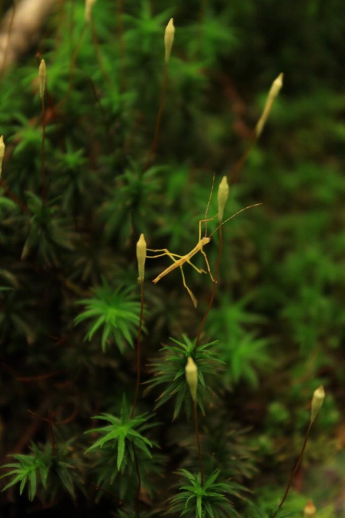 森の体操選手