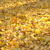 金色の季節