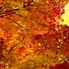 秋色グラデーション
