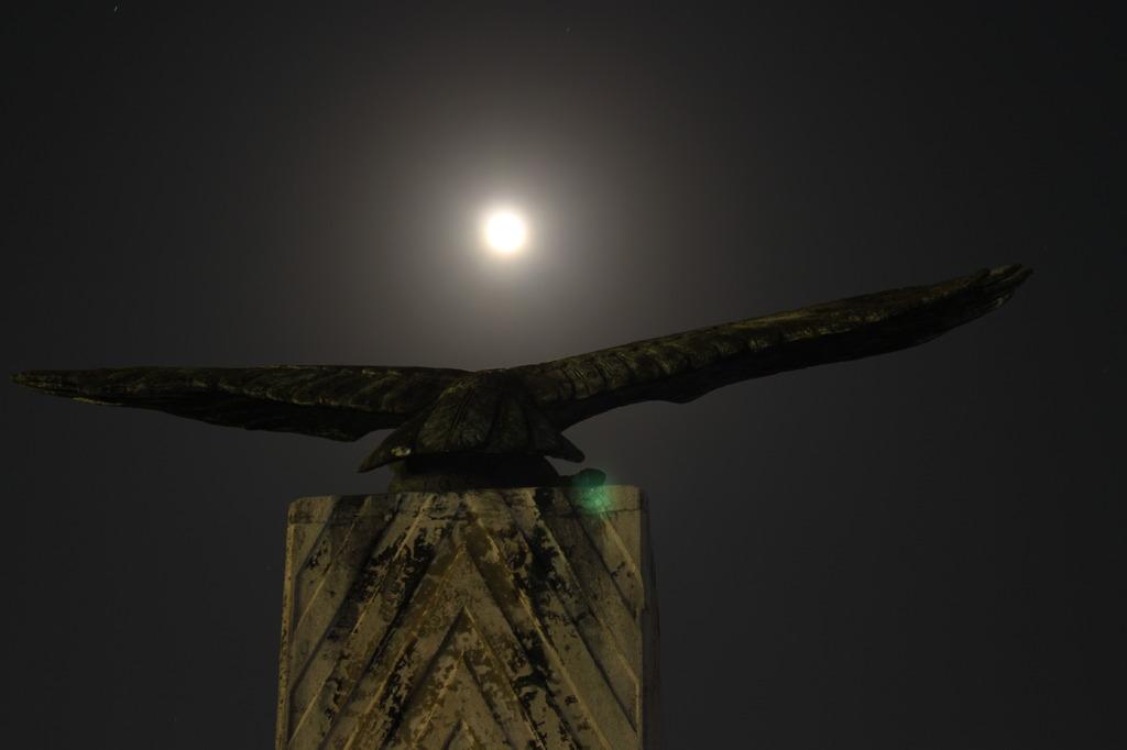 石垣市鳥「カンムリワシ」