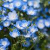 ブルーに染まる。_01