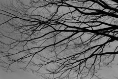 不気味な枝