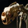 シロクマ 骸骨(笑)