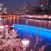 浪花夜桜の艶