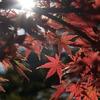 秋のひととき
