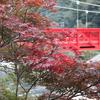紅葉と紅い橋