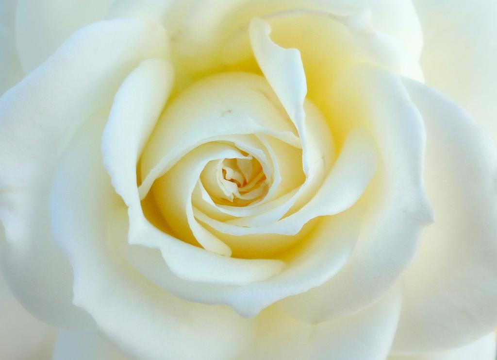 薔薇の秘密