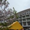 ヤフードームと、桜。