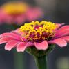 秋の花 2