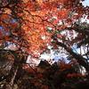 舟形山の紅葉