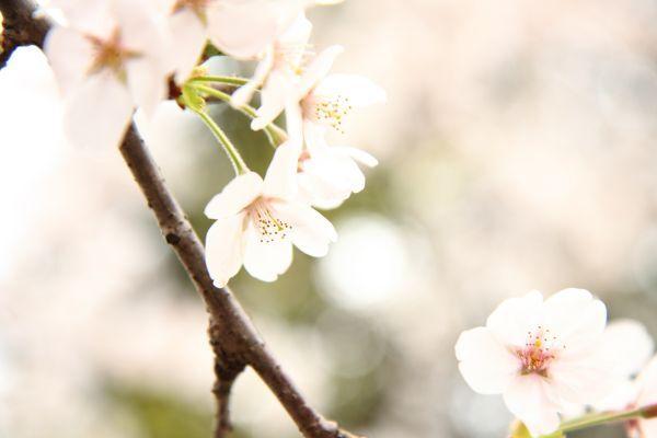 淡い春の色