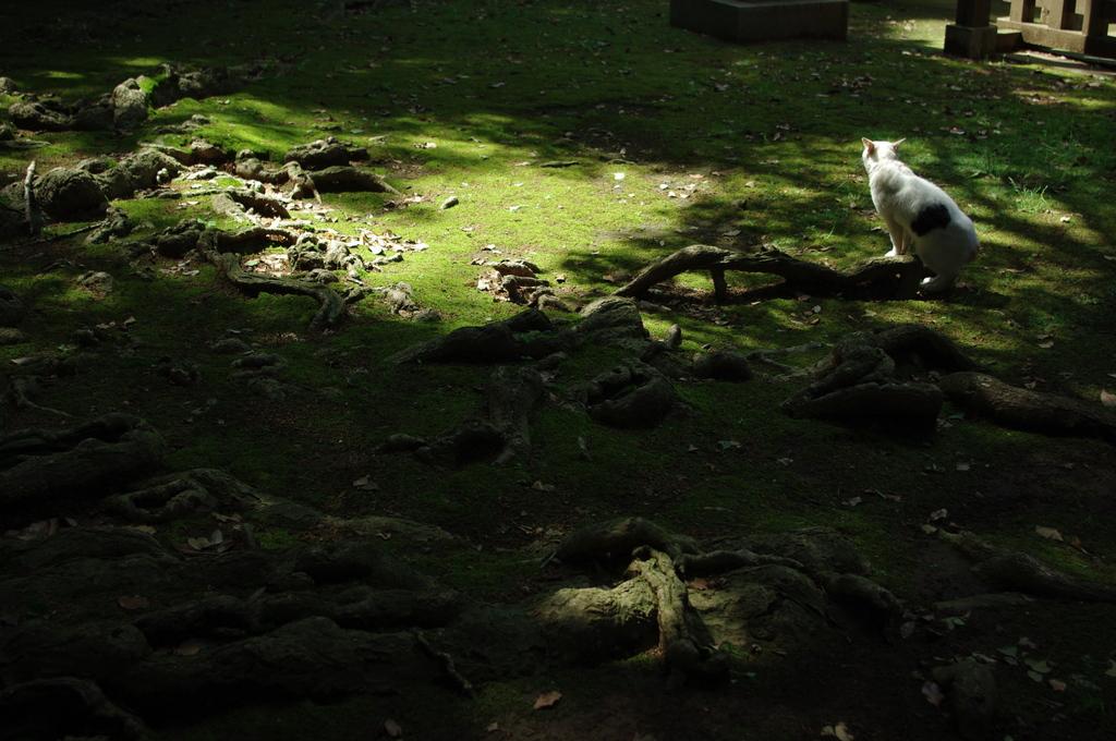 木漏れ日とネコ
