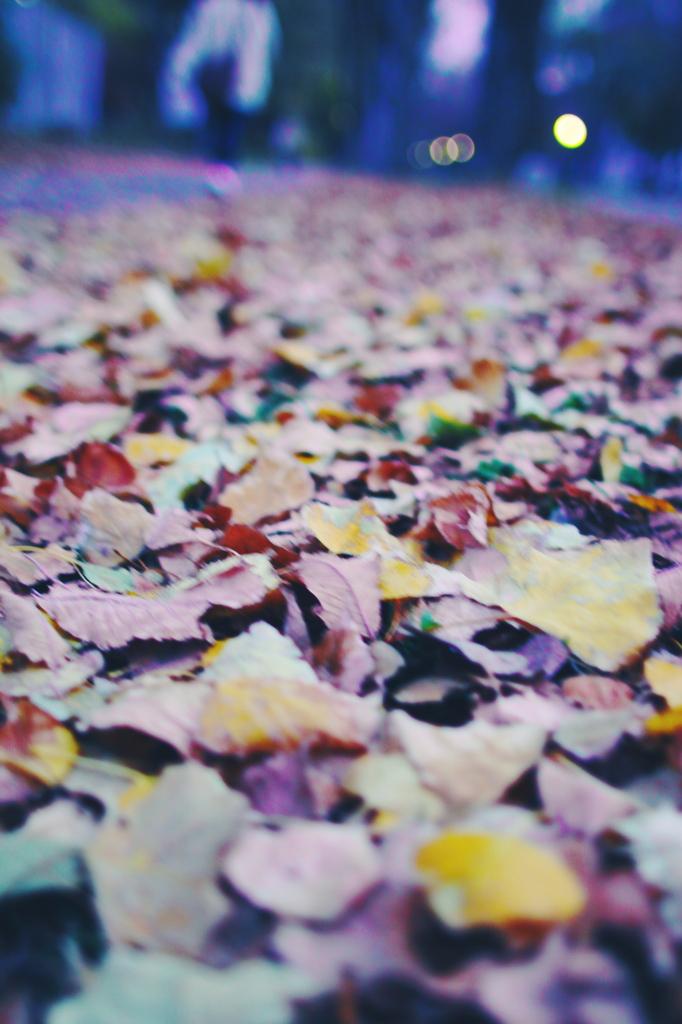 秋の終わり。
