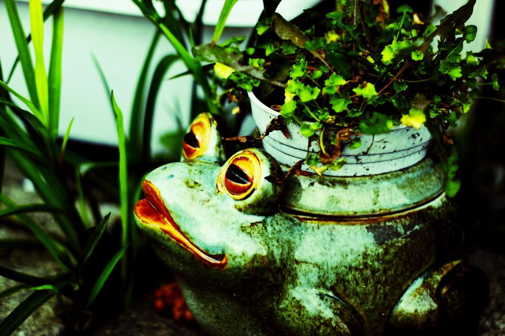 カエルの鉢植え。