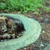 眠る野良猫。