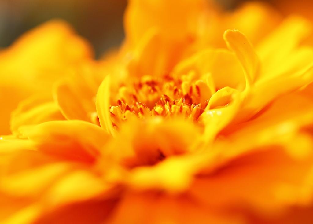 秋に咲く花・・・・・^^;