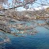 宇治川にて春