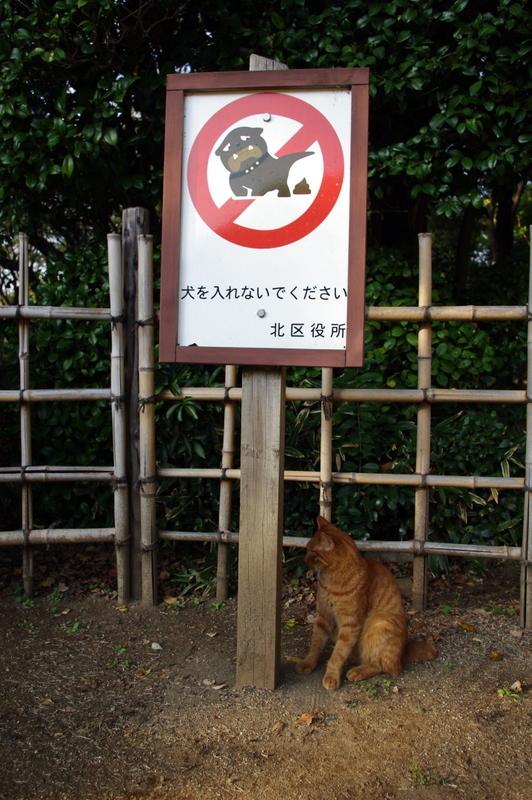 猫はいいの?