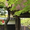 円覚寺の春
