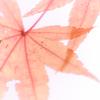 錦繍の秋 ⑥
