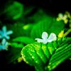 濡れた花びら