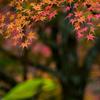錦繍の秋 ④