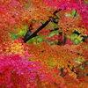 晩秋の紅葉 Ⅷ ~ 錦 ~