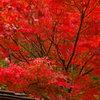 晩秋の紅葉 Ⅱ