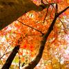 錦繍の秋 ⑮