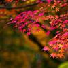 錦繍の秋 ⑤