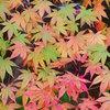 晩秋の紅葉 Ⅴ~ 彩り ~
