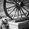 車輪と愛犬