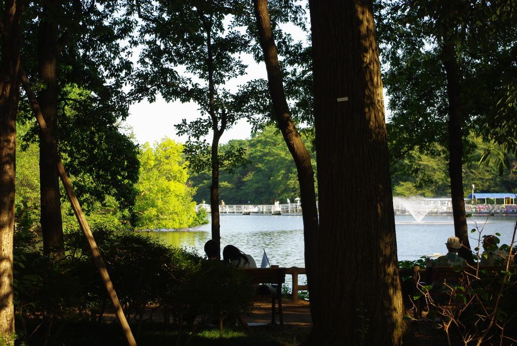 日曜日、昼下がり、公園