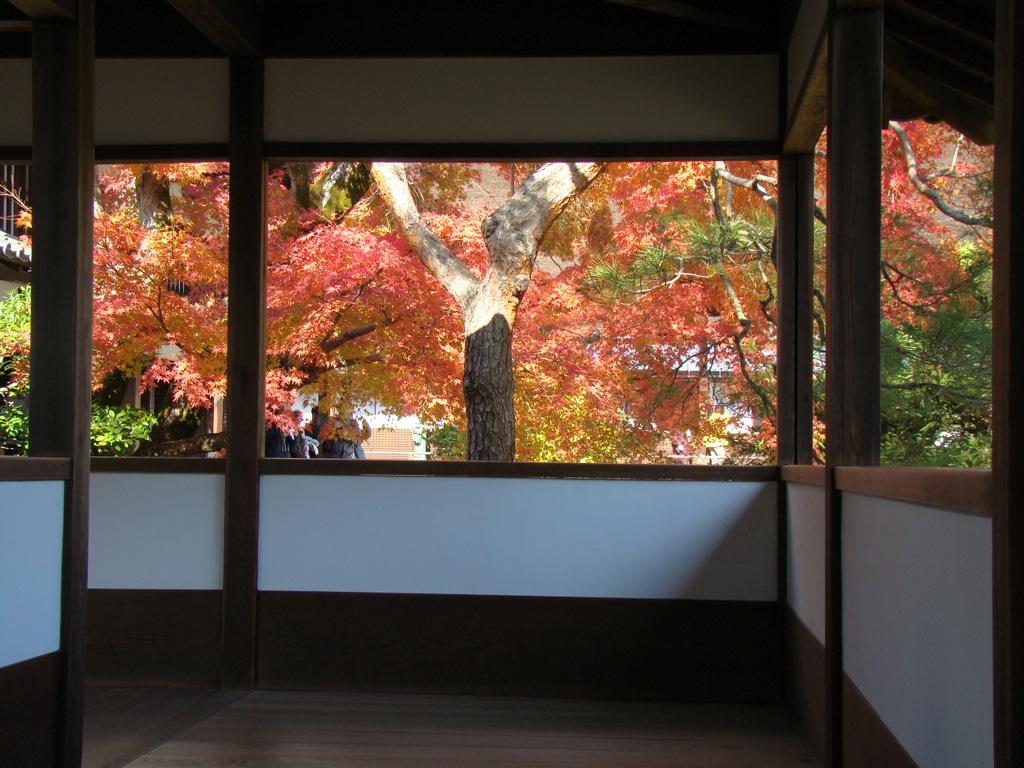 仁和寺からの紅葉