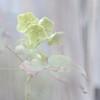 Spring has come Ⅱ