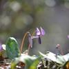 Spring ephemeral Ⅲ