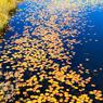 秋色の池塘