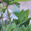 Spring of my garden Ⅳ